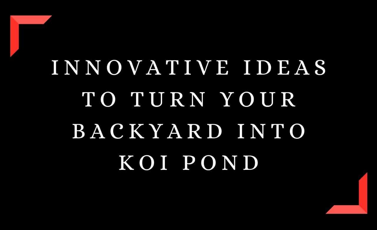 Innovative Ideas To Turn Your Backyard Into Koi Pond