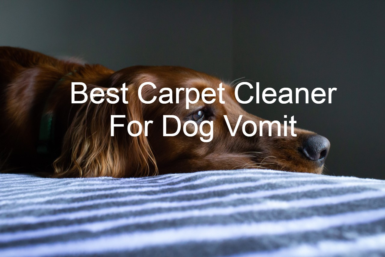 Best Carpet Cleaner For Dog Vomit
