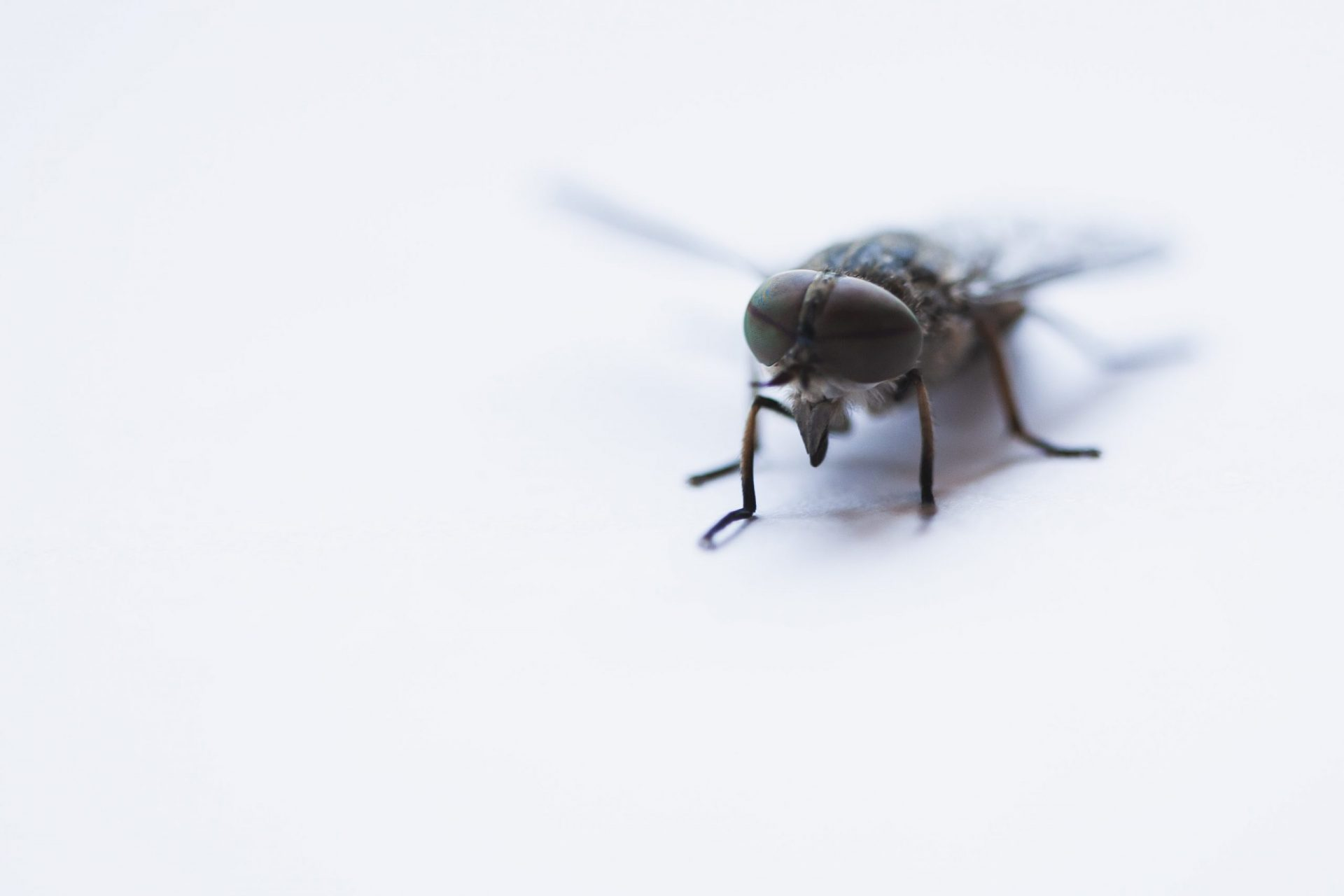 Side Effects of Ultrasonic Pest Repellers
