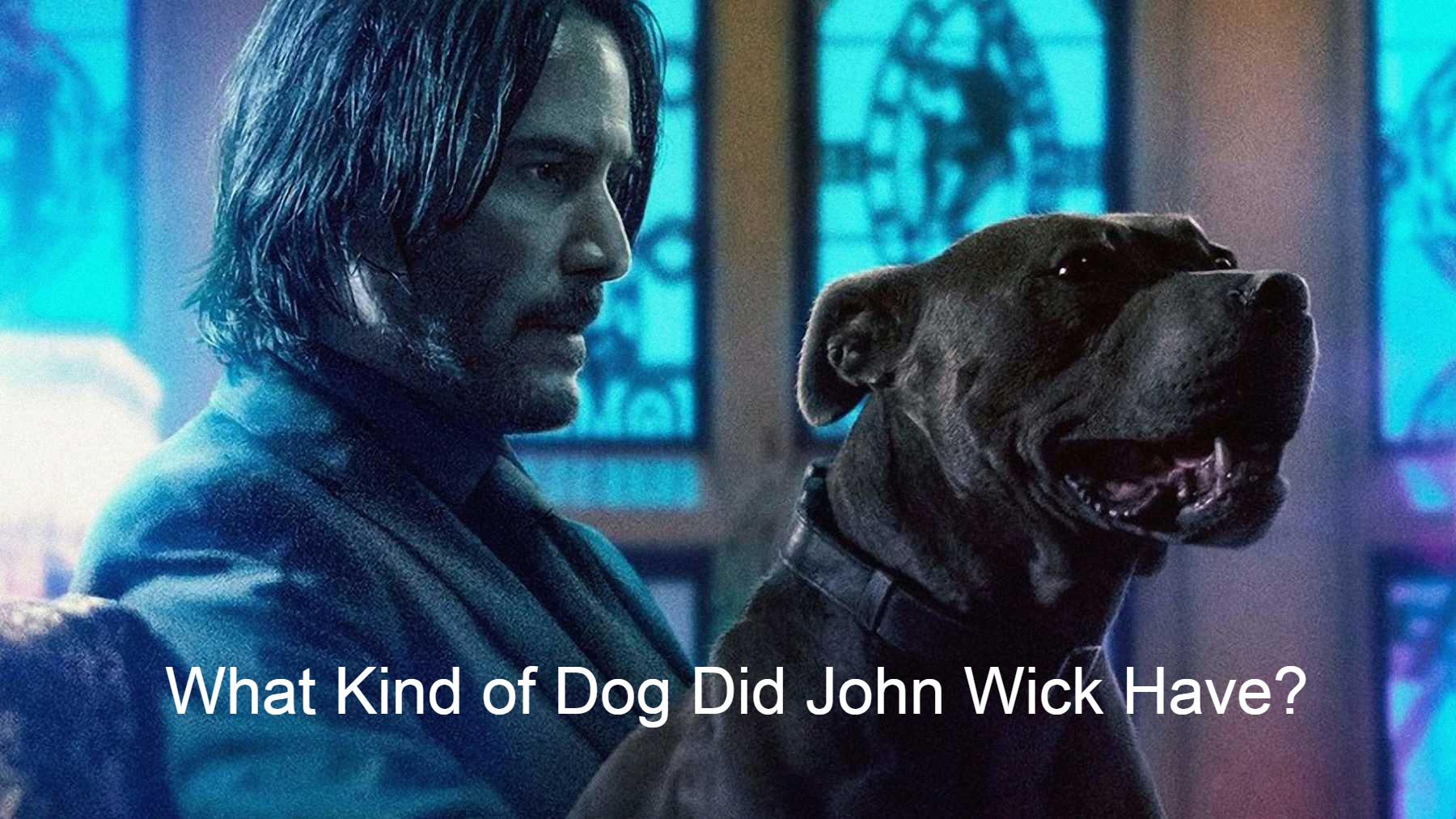 What Kind of Dog Did John Wick Have?