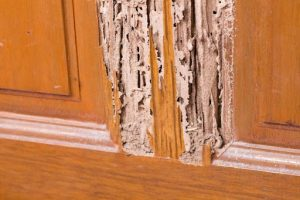 Natural Ways To Control Termite Infestation