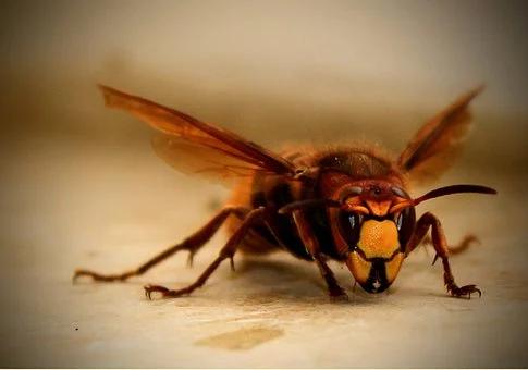 Ways To Keep Pests Away