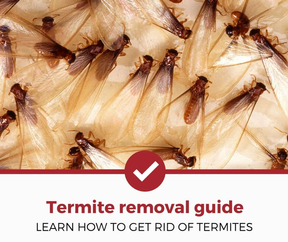 how-to-get-rid-of-termites-guide
